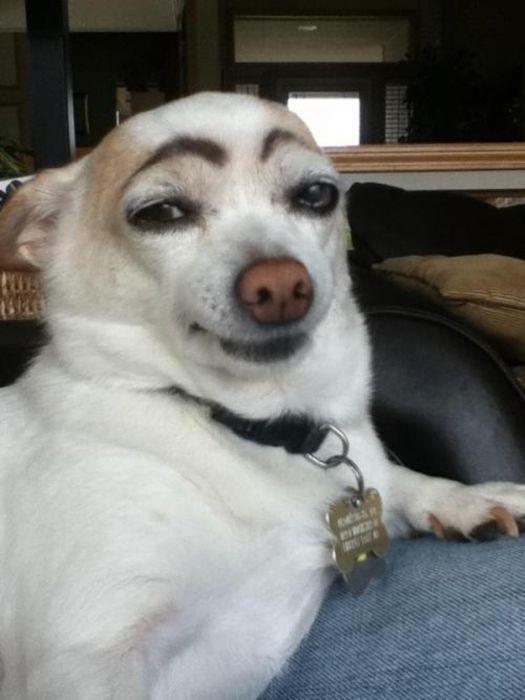 As fotos mais engraçadas de animais em 2012 38