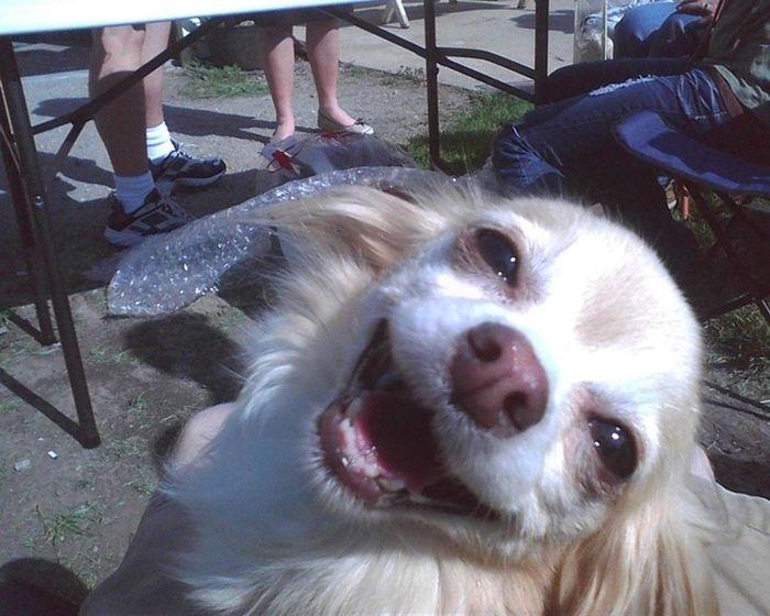 As fotos mais engraçadas de animais em 2012 42