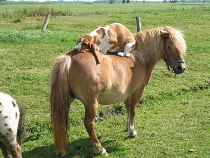 As fotos mais engraçadas de animais em 2012 43