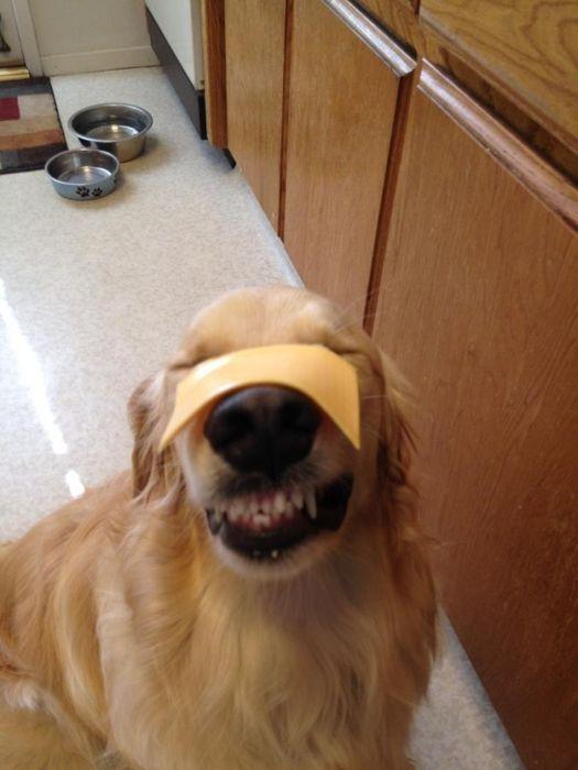 As fotos mais engraçadas de animais em 2012 44