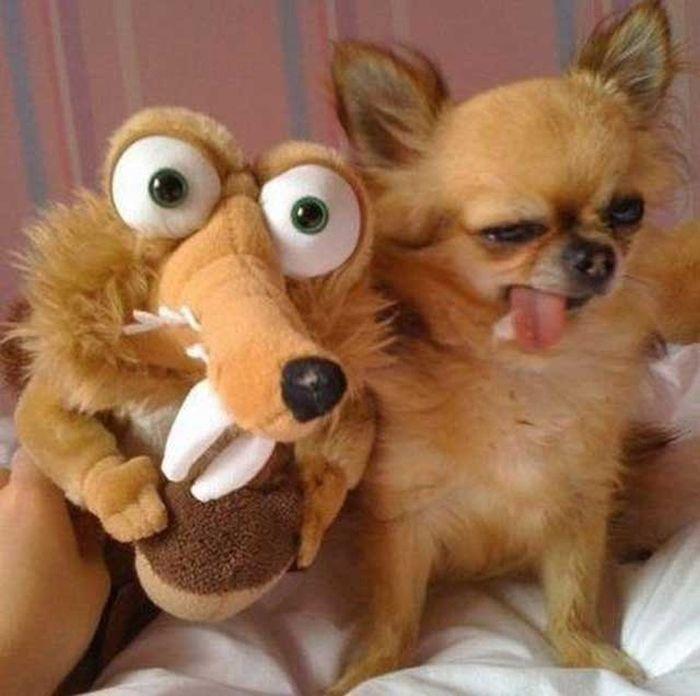 As fotos mais engraçadas de animais em 2012 45