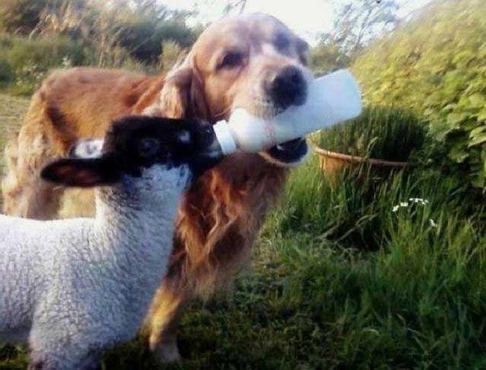 As fotos mais engraçadas de animais em 2012 46