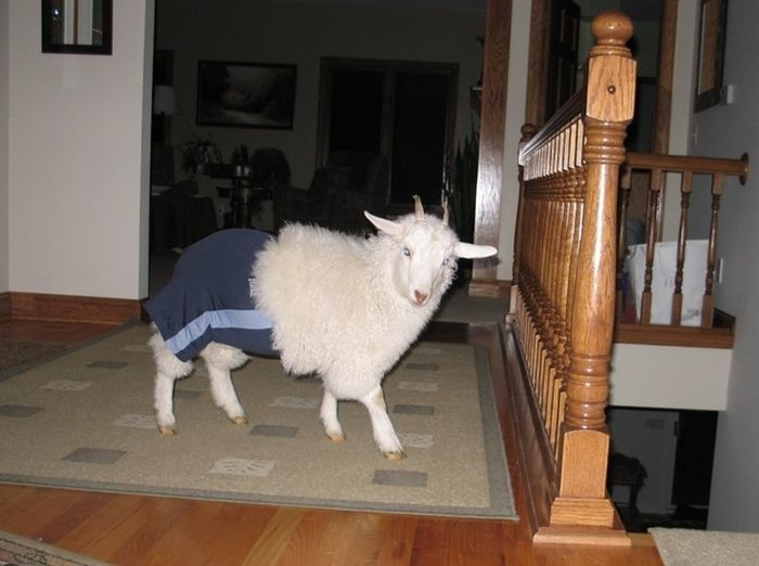 As fotos mais engraçadas de animais em 2012 47
