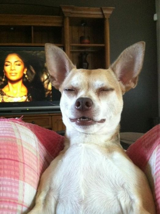 As fotos mais engraçadas de animais em 2012 48