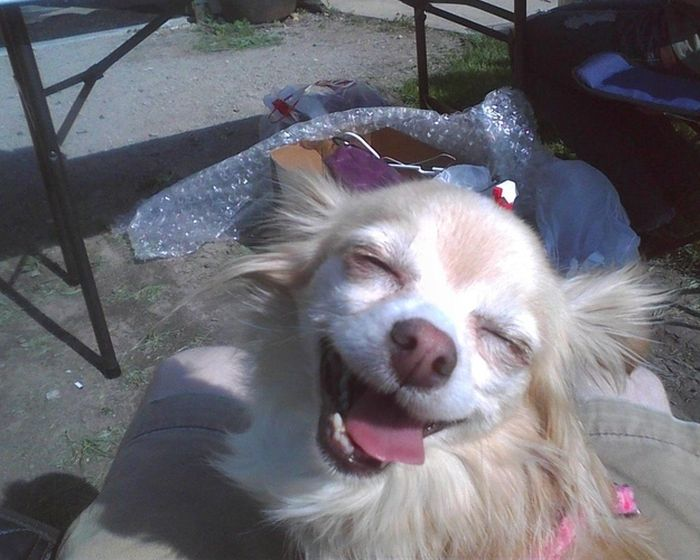 As fotos mais engraçadas de animais em 2012 49