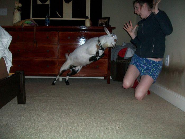 As fotos mais engraçadas de animais em 2012 51