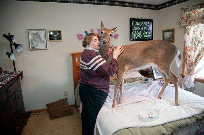 As fotos mais engraçadas de animais em 2012 52