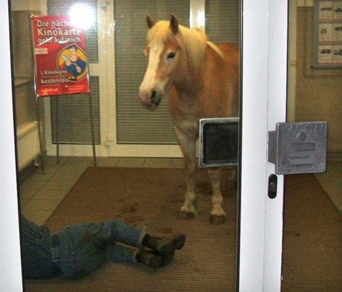 As fotos mais engraçadas de animais em 2012 57