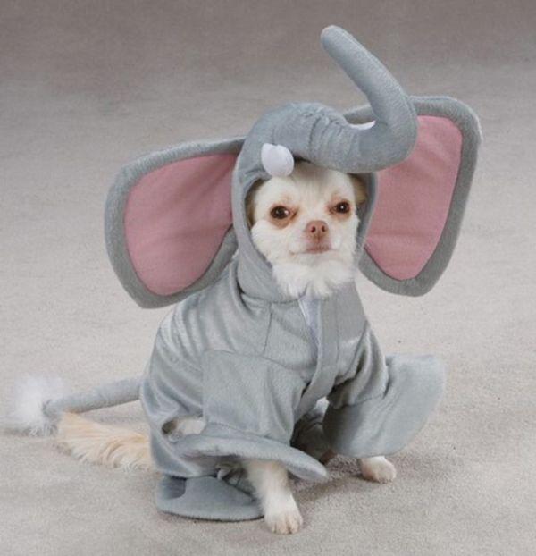 As fotos mais engraçadas de animais em 2012 61