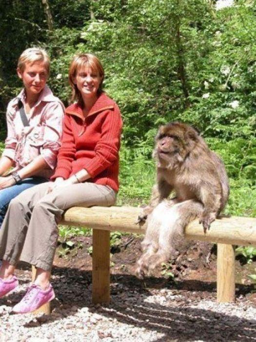 As fotos mais engraçadas de animais em 2012 62