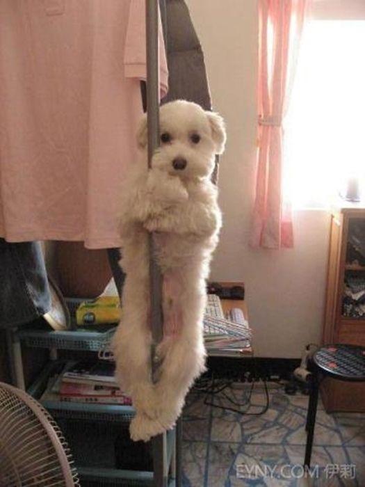 As fotos mais engraçadas de animais em 2012 63