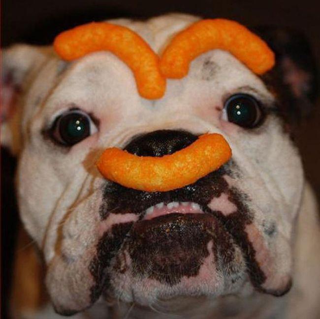 As fotos mais engraçadas de animais em 2012 66