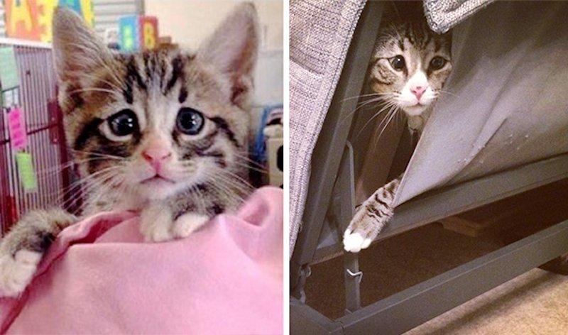 Este gatinho vesgo tem uma expressão permanentemente preocupada 05