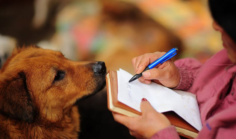 Chinesa viajou 2.400 kms e pagou quase 4 mil reais para salvar 100 cães que iam ser comidos 20