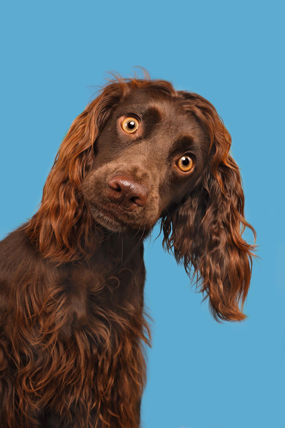 Os retratos engraçados que revelam as emoções fugazes dos cães 02