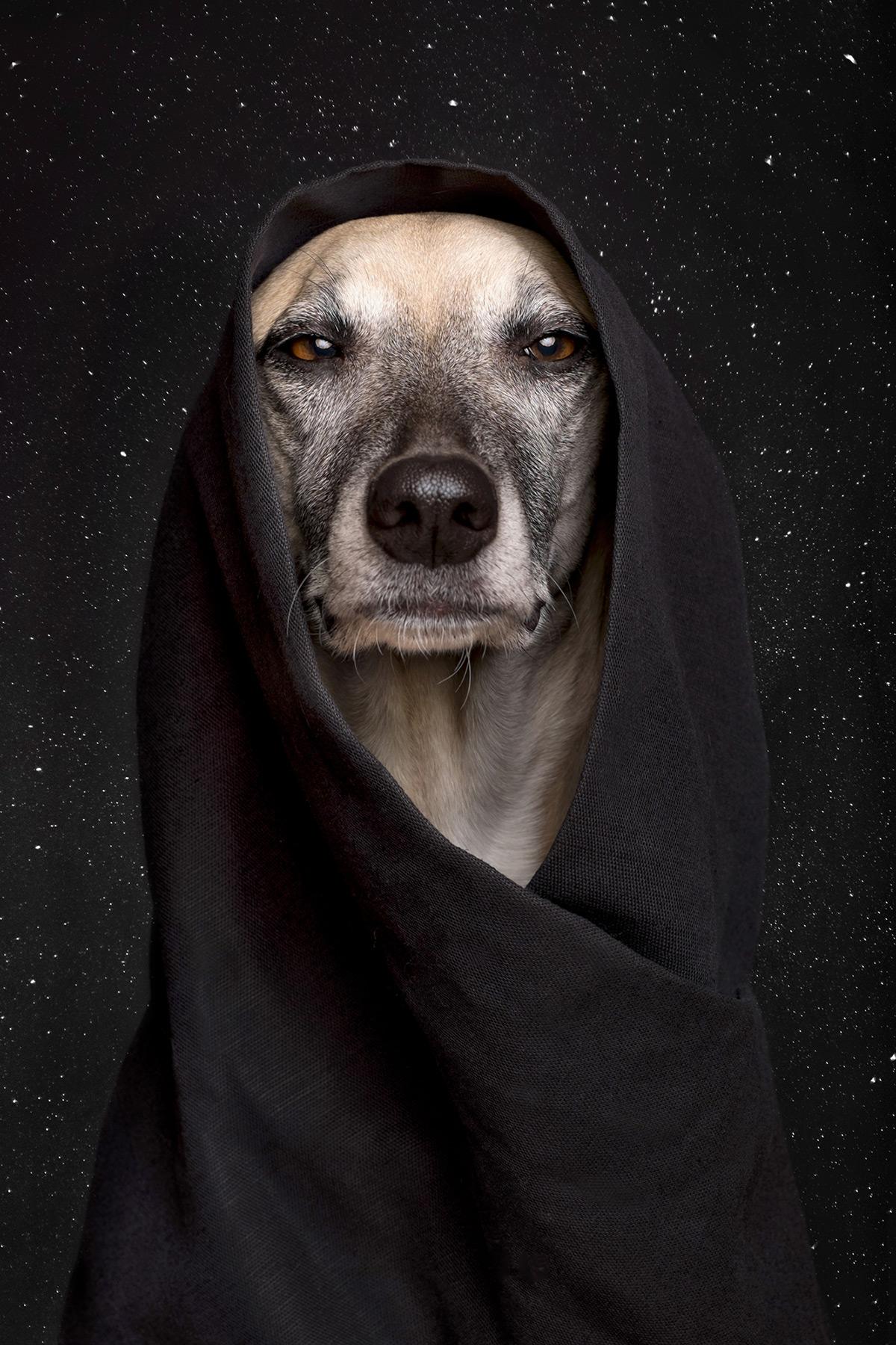Os retratos engraçados que revelam as emoções fugazes dos cães 05
