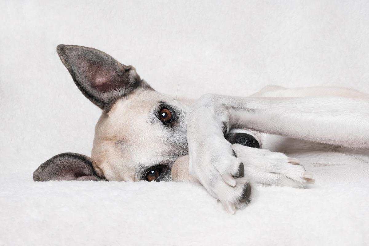 Os retratos engraçados que revelam as emoções fugazes dos cães 08