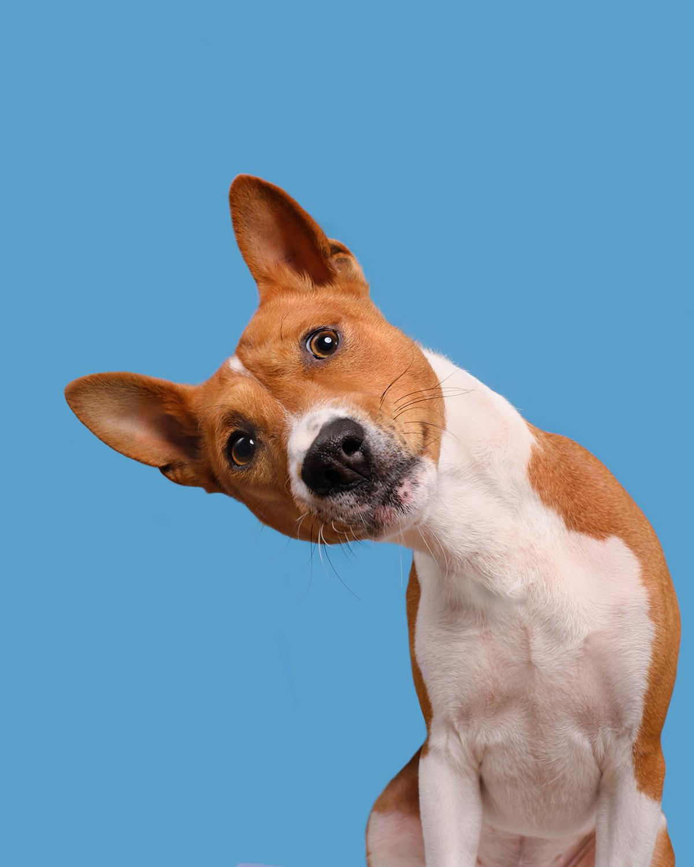 Os retratos engraçados que revelam as emoções fugazes dos cães 09