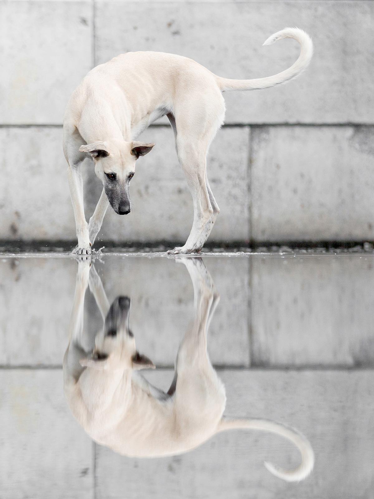 Os retratos engraçados que revelam as emoções fugazes dos cães 10