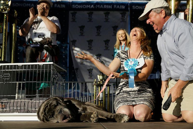 Apresentamos Martha, a ganhadora do concurso de cães mais feios do mundo 03