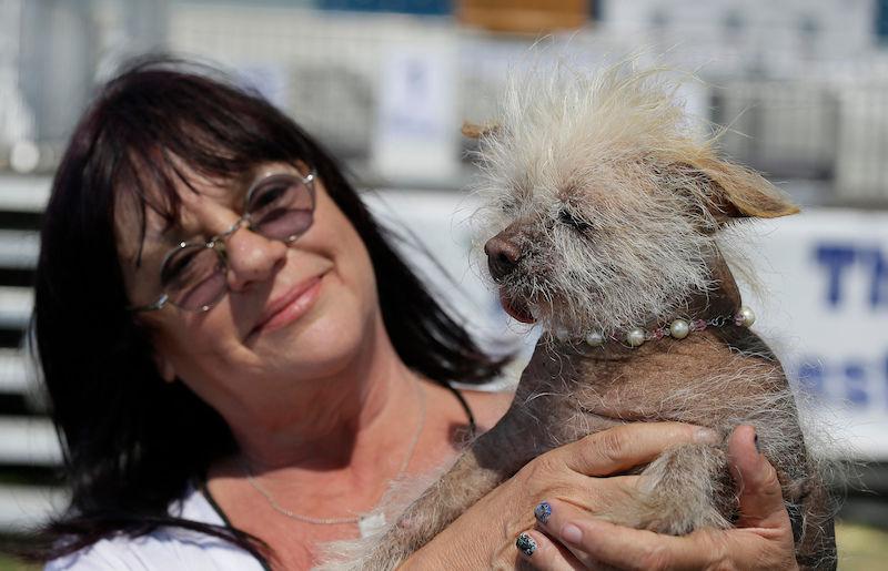 Apresentamos Martha, a ganhadora do concurso de cães mais feios do mundo 05