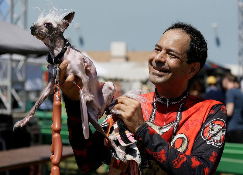 Apresentamos Martha, a ganhadora do concurso de cães mais feios do mundo 06