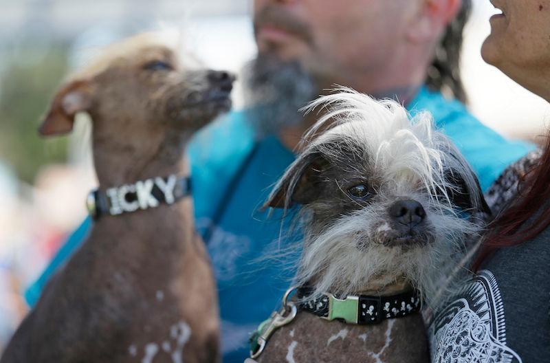 Apresentamos Martha, a ganhadora do concurso de cães mais feios do mundo 07