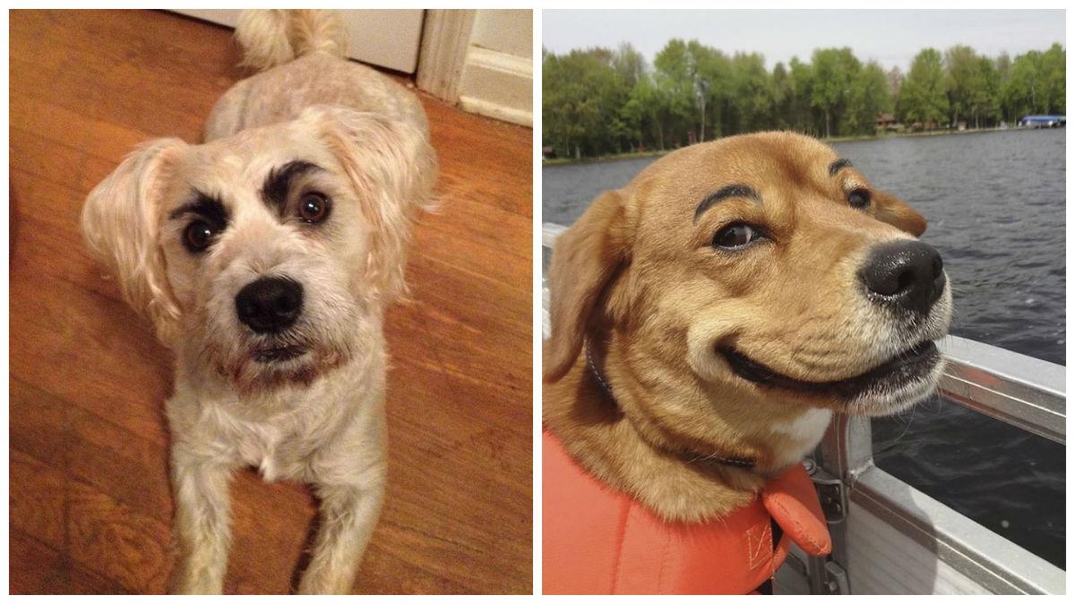 15 engraçados cães com sobrancelhas