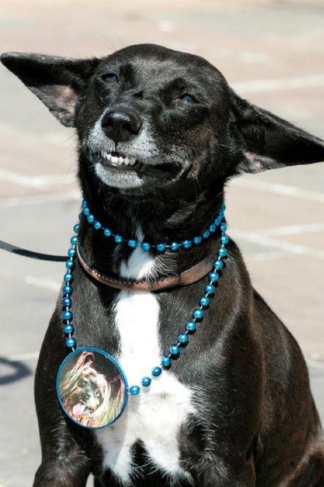 Um sorriso animal 03