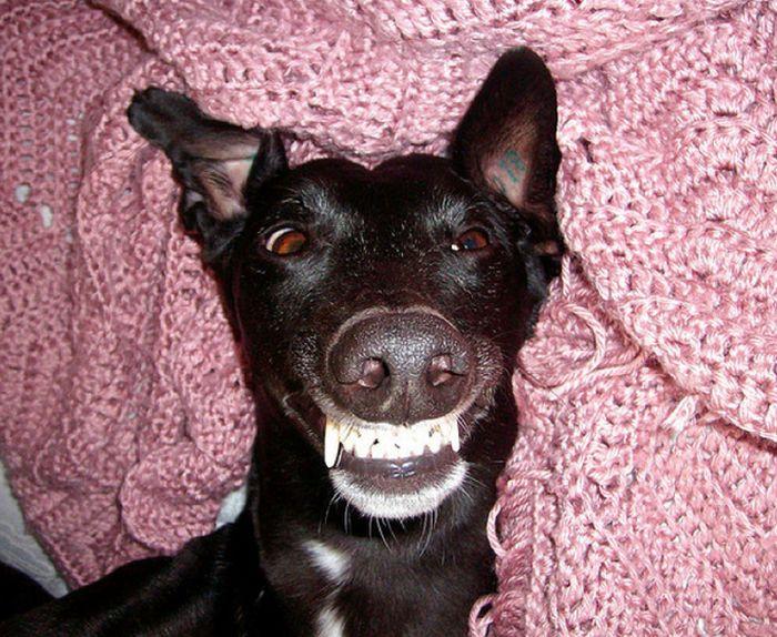 Um sorriso animal 07