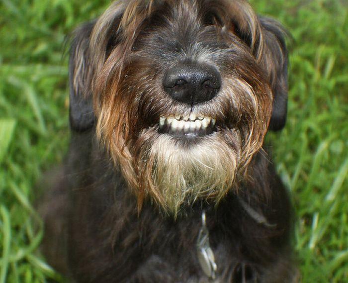 Um sorriso animal 11