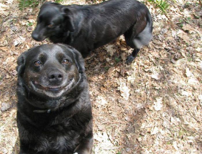 Um sorriso animal 12