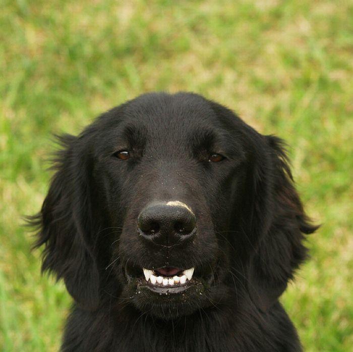 Um sorriso animal 13
