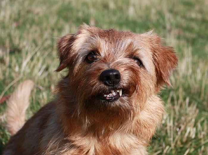 Um sorriso animal 17