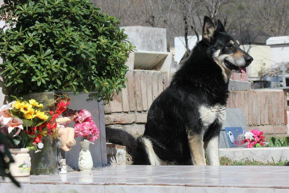 Cão permanece ao lado da sepultura do dono há seis anos 01