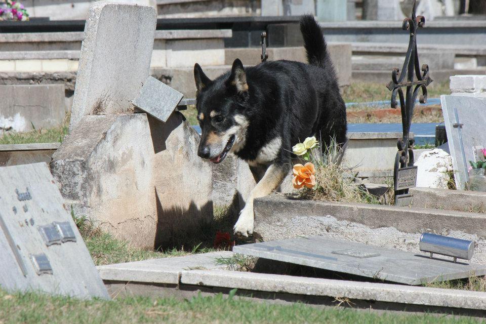 Cão permanece ao lado da sepultura do dono há seis anos 02
