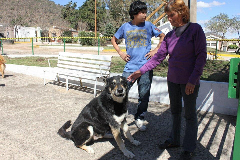 Cão permanece ao lado da sepultura do dono há seis anos 03