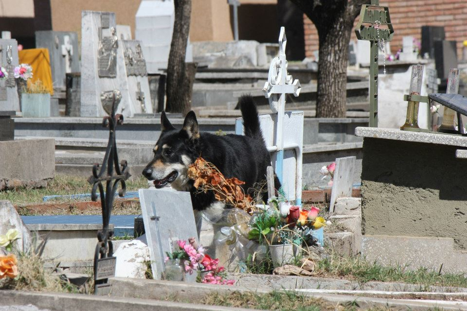Cão permanece ao lado da sepultura do dono há seis anos 04