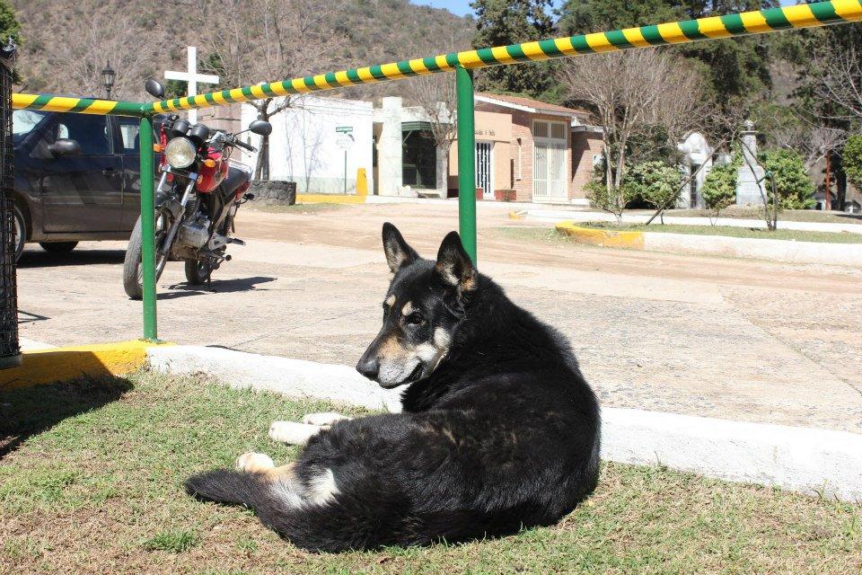 Cão permanece ao lado da sepultura do dono há seis anos 05