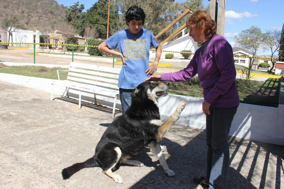 Cão permanece ao lado da sepultura do dono há seis anos 06