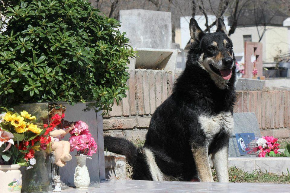 Cão permanece ao lado da sepultura do dono há seis anos 10