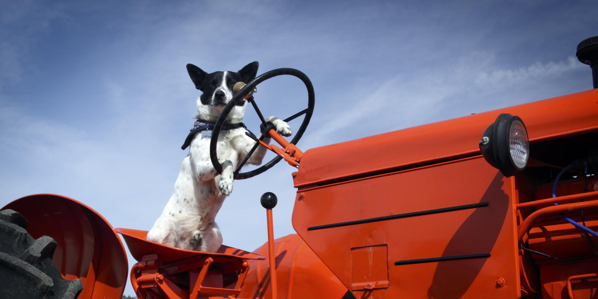 Cão liga trator que atropela e mata um agricultor milionário