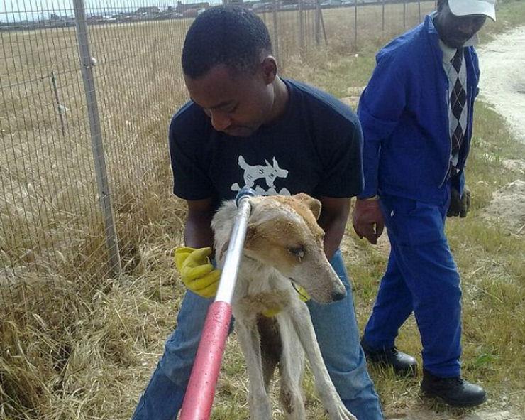 Cão enterrado vivo na África do Sul
