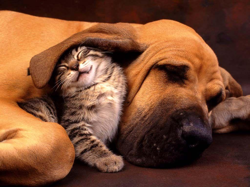 Cientistas dizem novamente que cão é mais inteligente que o gato 01