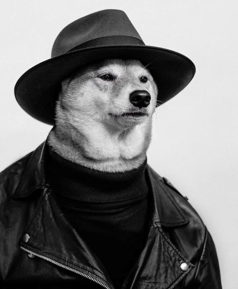 Este cão elegante se veste melhor do que você 18
