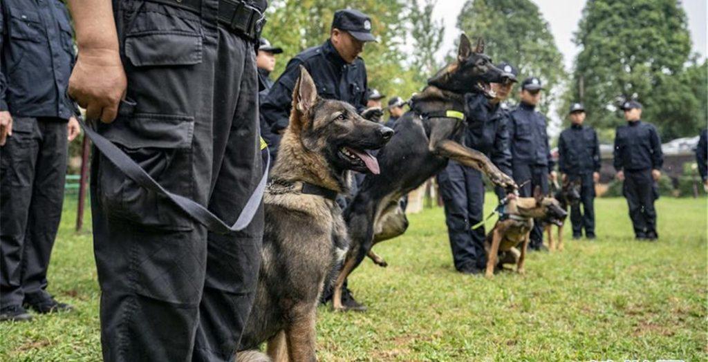 Seis cães clonados se juntam à força policial de Pequim