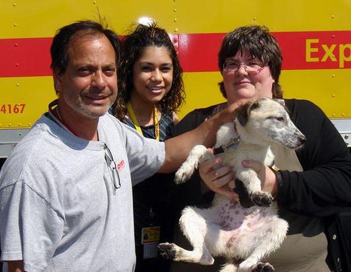 Cãozinho se tornou um símbolo de esperança para família de soldado morto 07