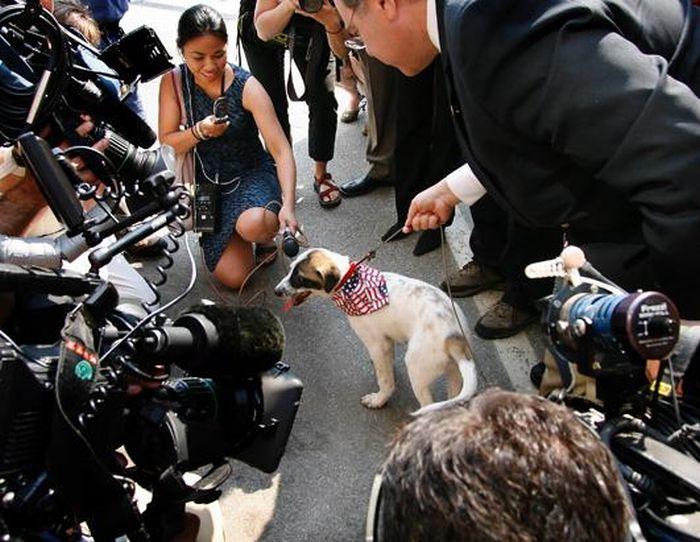 Cãozinho se tornou um símbolo de esperança para família de soldado morto 08