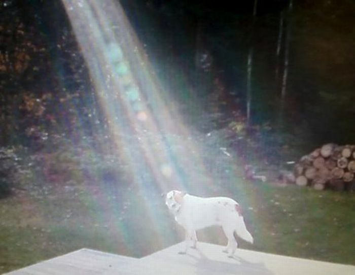 Cãozinho se tornou um símbolo de esperança para família de soldado morto 10