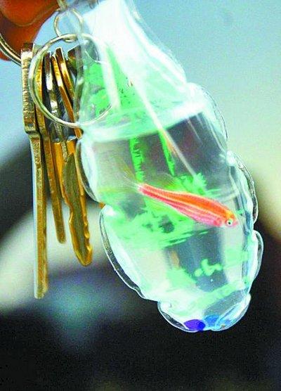 Chaveiros com animais vivos são a nova mania na China 05